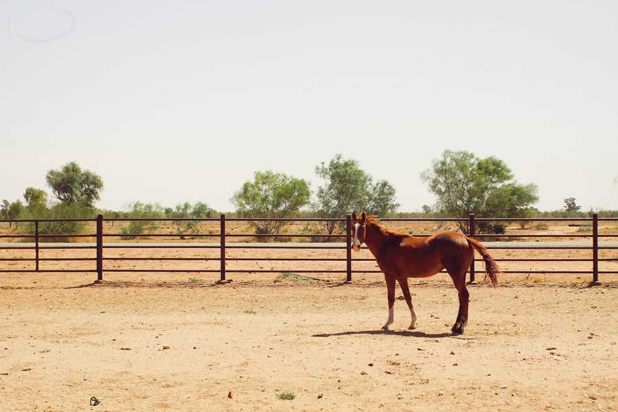 Alice Springs Engagement Photographer: Horse in the stockyards