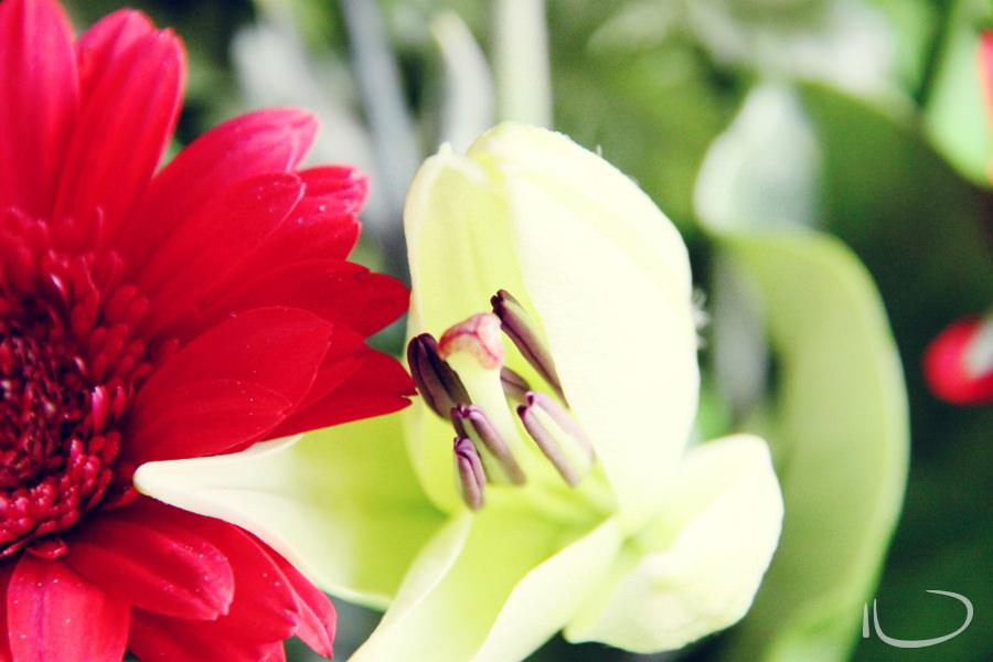 Newport Sydney Wedding Photographer: Blooming Oriental Lily