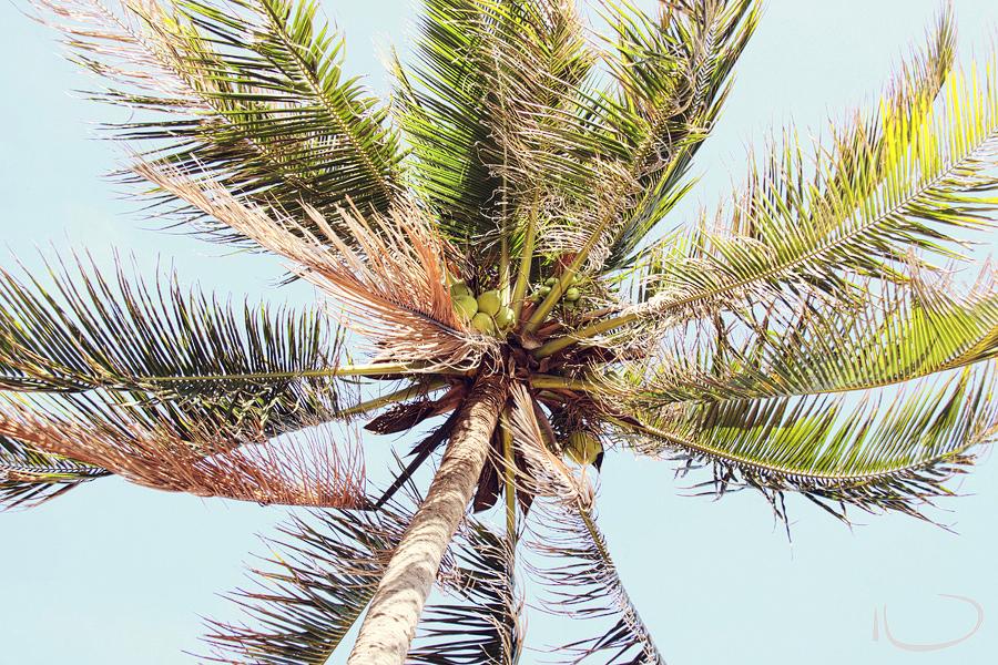 Mui Ne Vietnam Wedding Photographer: Coconut tree from the ground