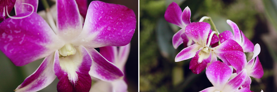 Vietnam Wedding Photographer: Purple orchids