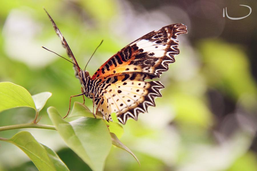 Vietnam Wedding Photographer: Butterfly