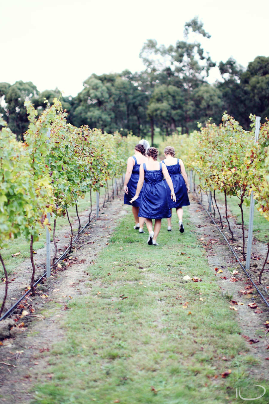 Otway Estate Barongarook Victoria Wedding Photographer: Bridesmaids in vineyards