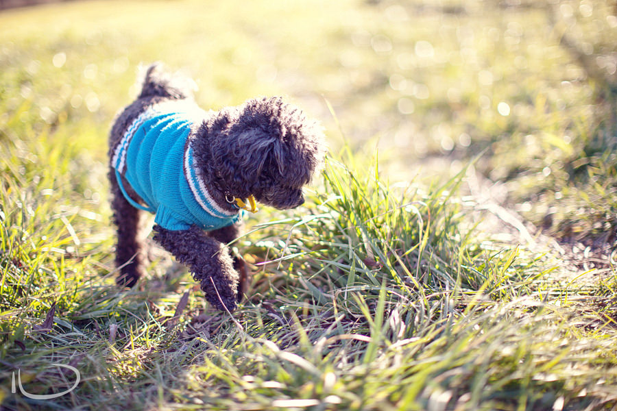 Canberra Family Photographer: Dog wearing sweater
