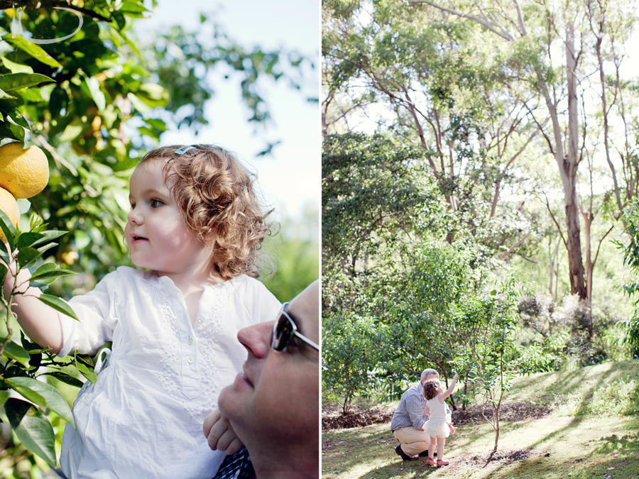Kurrajong Sydney Child Photographer: Toddler picking oranges