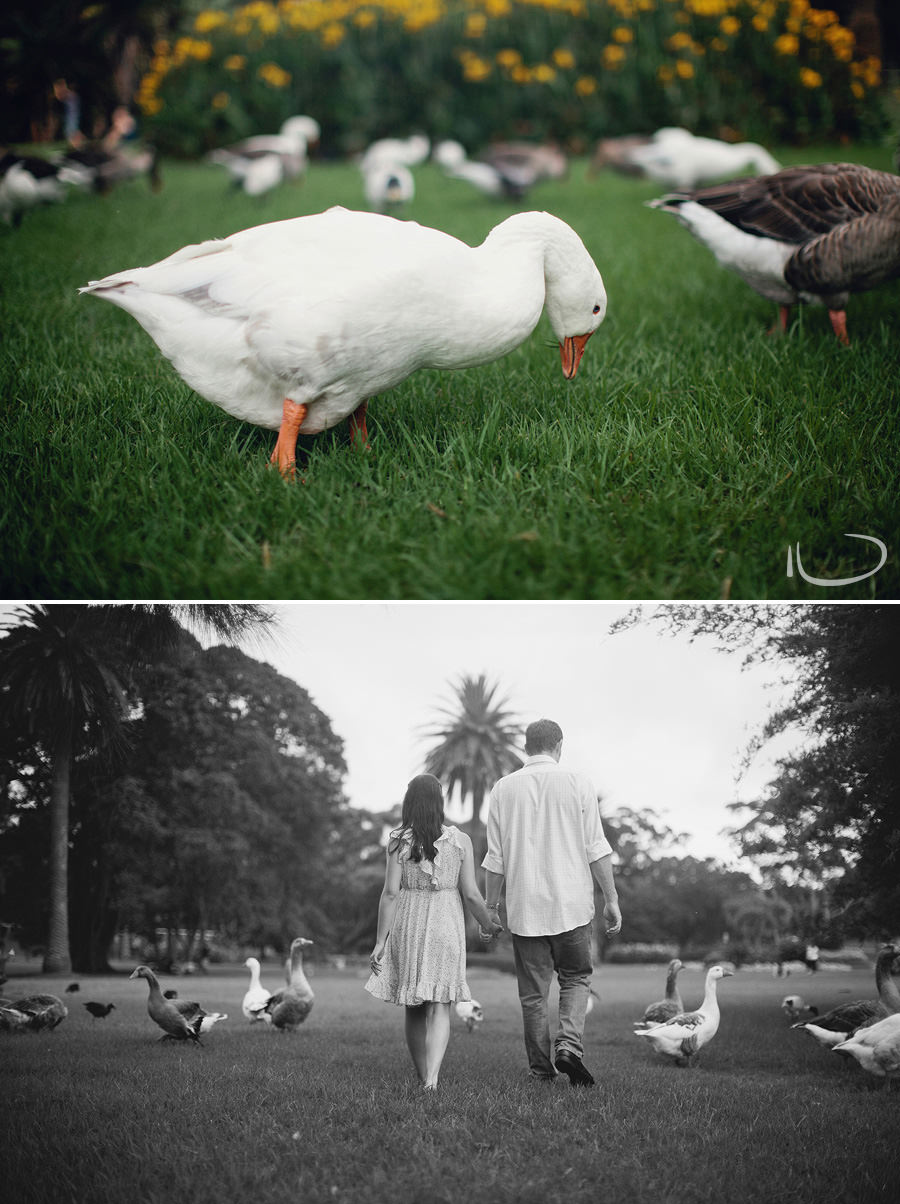 Centennial Park Engagement Photography: Ducks in Centennial Park