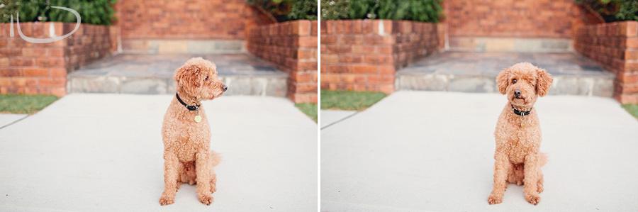 Sydney Pet Photographer: Family dog at wedding