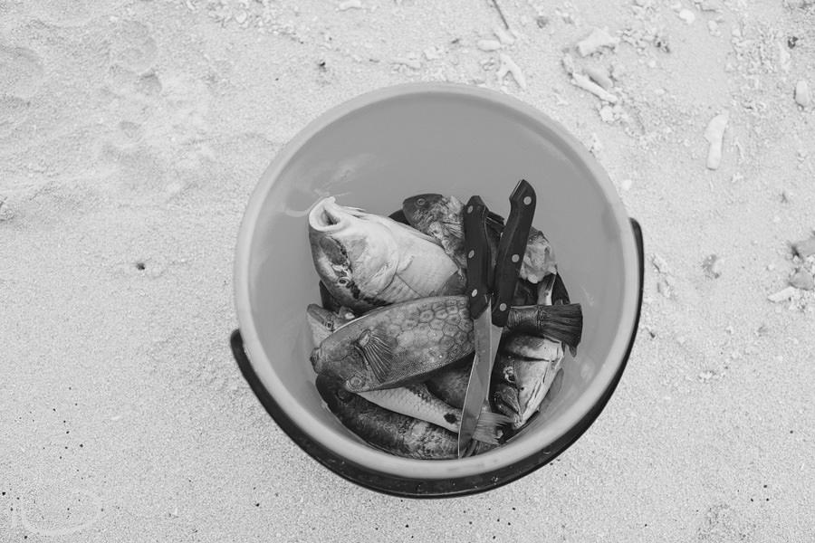 Fiji Travel Photography: Fish