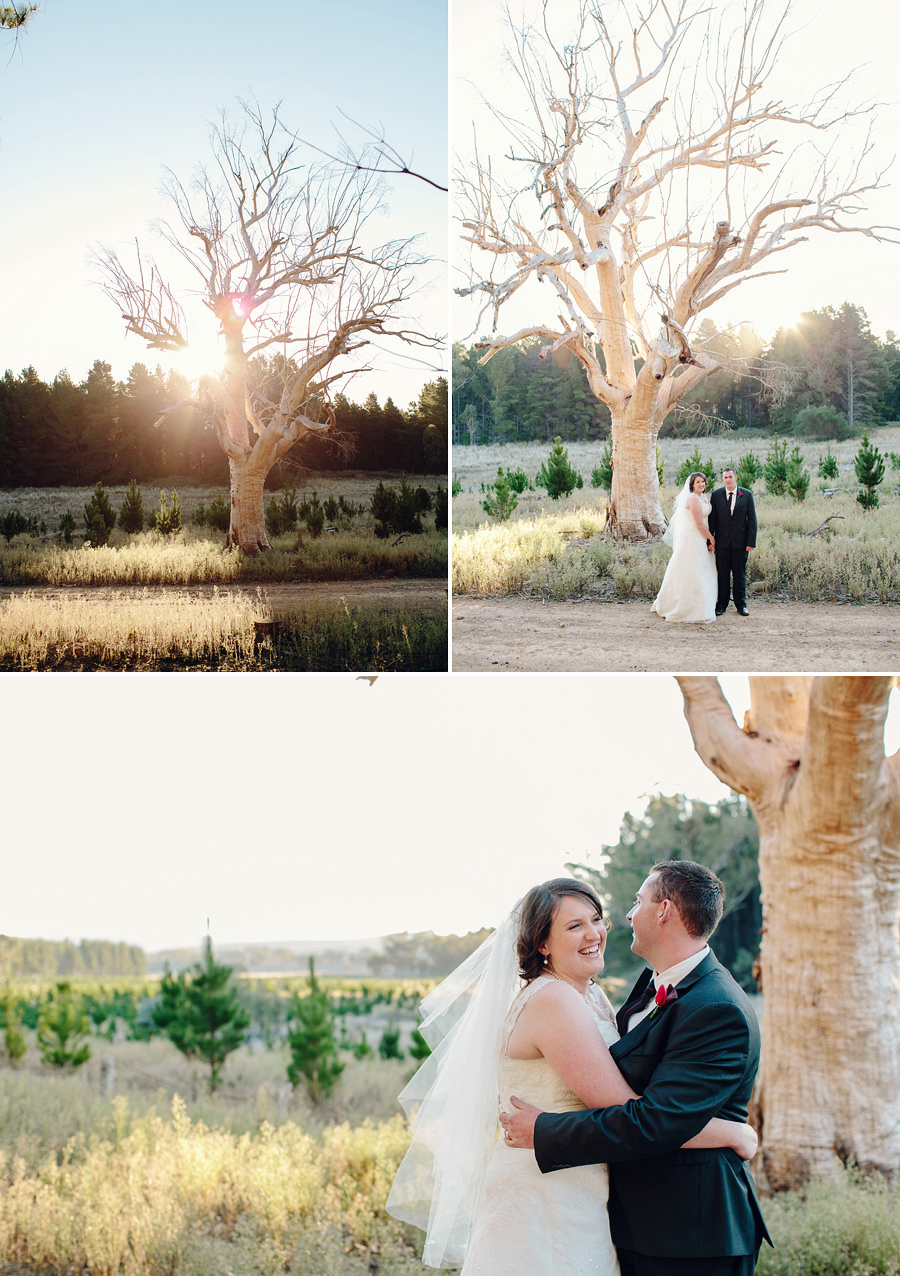 Kowen Pine Forest Wedding Photographer: Bride & Groom