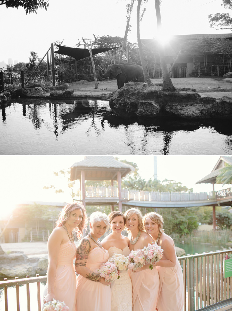 Taronga Zoo Wedding Photographers: Portraits