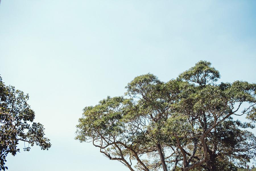 Balmoral Wedding Photographer: Trees